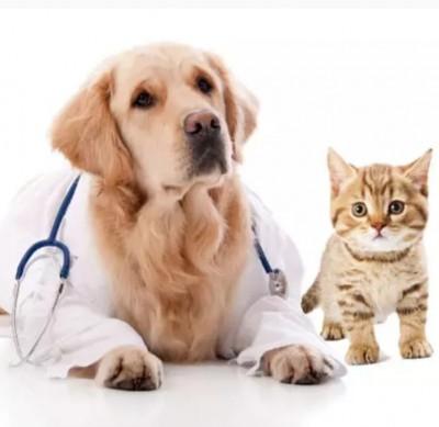 MedVet Clinica Veterinara Focsani