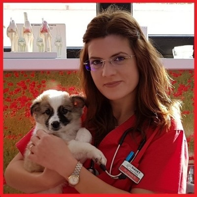 radiologie veterinara SIAVET MEDICAL GALATI