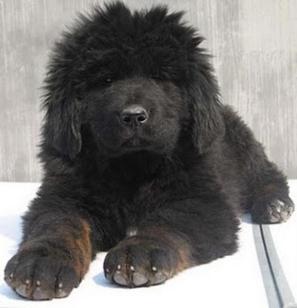 Dog Breeds In Punjab With Pictures And Price