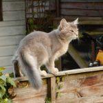 Somaleza pisica pe gard