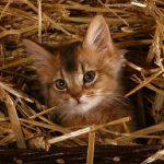 Somaleza pisica in cos