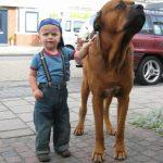 caine Tosa cu copilul