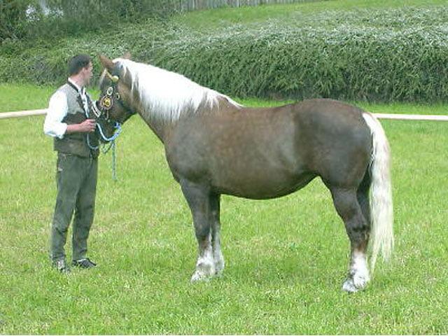 Calul Abtenauer