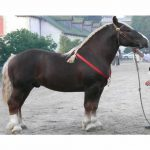 calul Breton