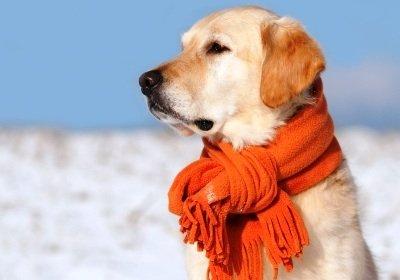 Cum protejam cainele iarna2
