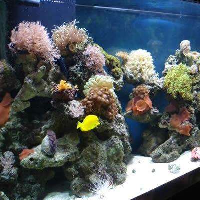 Decorarea acvariului
