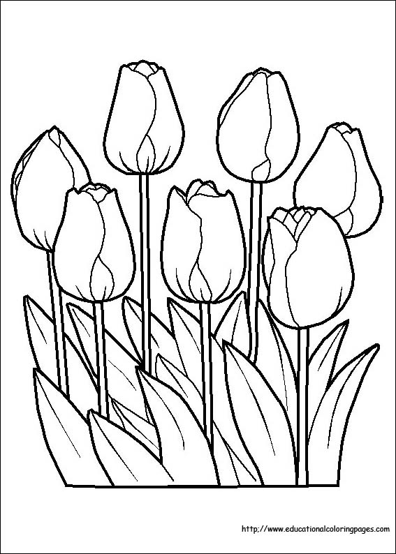 Flori de colorat