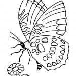 Fluturi de colorat