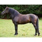 Hutul cal romanesc