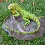 Iguana Verde pe piatra