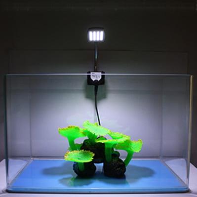Iluminatul acvariului