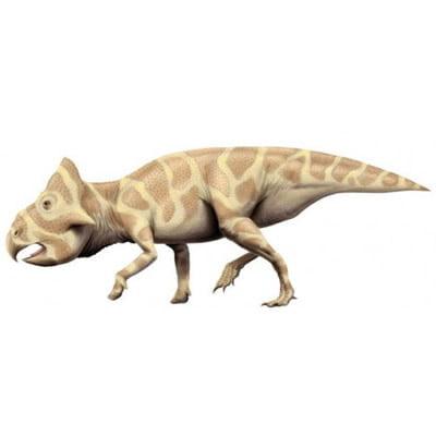 Leptoceratops