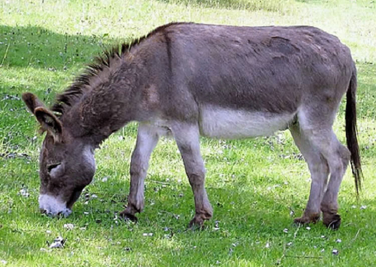 Imagini pentru poze cu magarusi