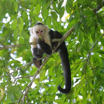 Maimuta Paianjen