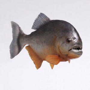 Peste Piranha