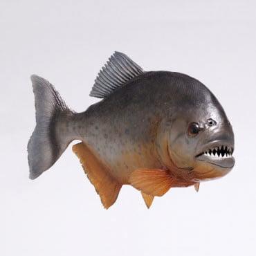 Pestele Piranha
