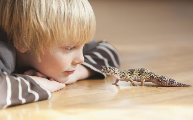 Reptile pentru incepatori