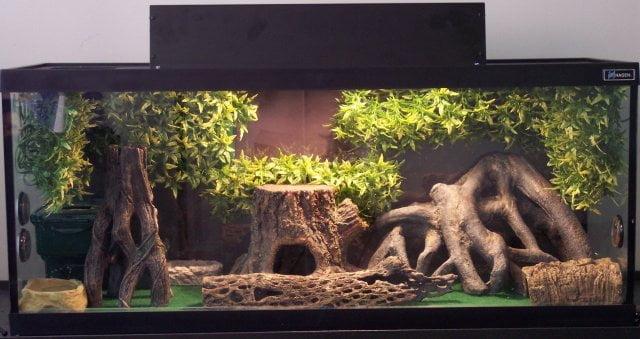 Tipuri de terarii pentru Gecko