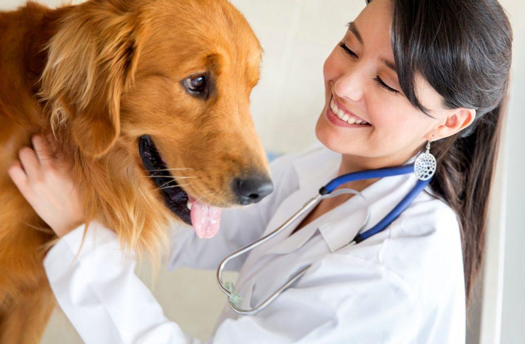 Poza cu un doctor veterinar si un caine