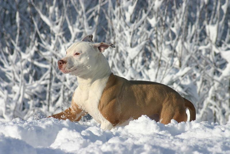 Cainele de curte iarna