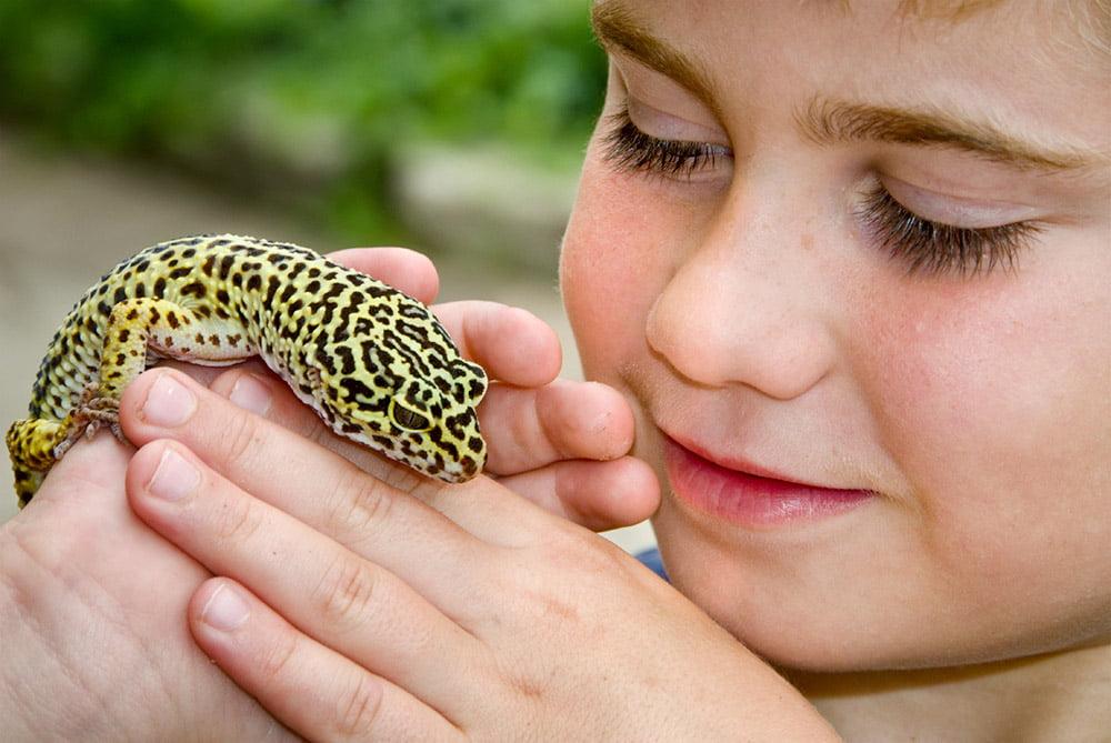 Cele mai potrivite reptile pentru copii