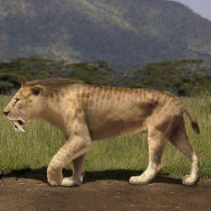 smilodon felina colti pumnal
