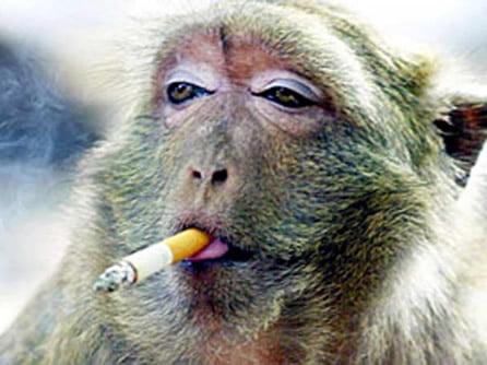 fumatul la animale