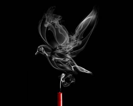 fumatul dauneaza animalelor