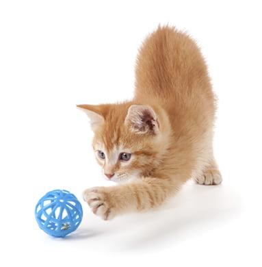 jucariile pisicilor mingia