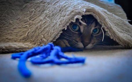 jucariile pisicilor sfoara