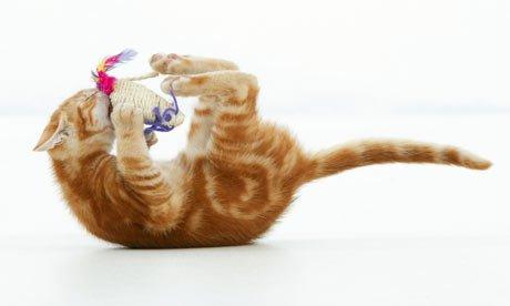 pisica se joaca cu soricel de plus