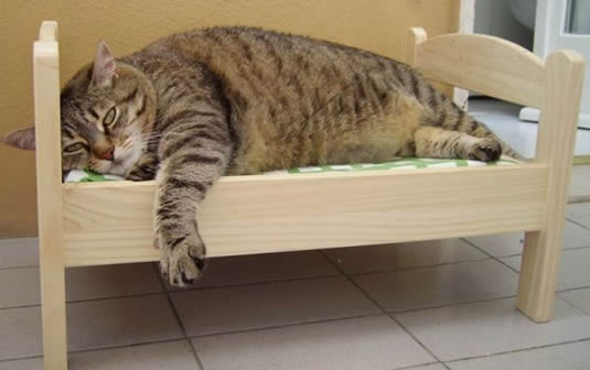 Obezitatea la pisici
