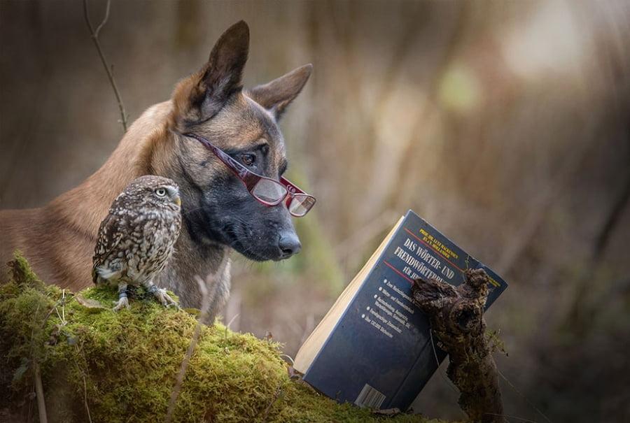 Cainele si bufnita citesc o carte