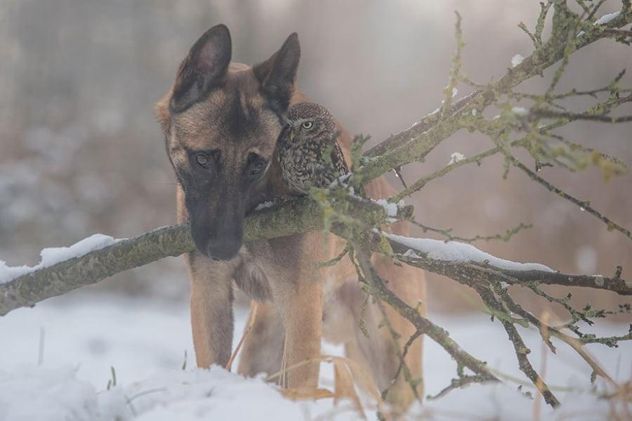 Cainele si bufnita iarna in padure