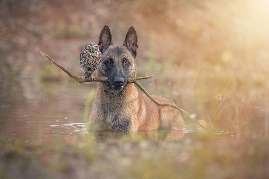 Cainele si bufnita in apa