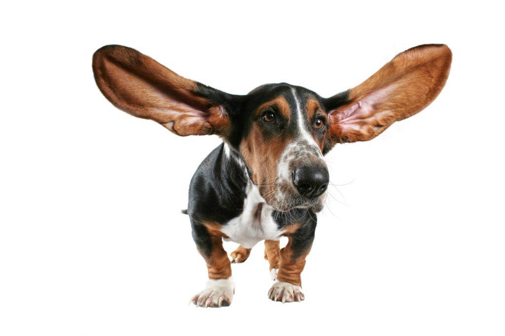 Cum se curata urechile cainelui