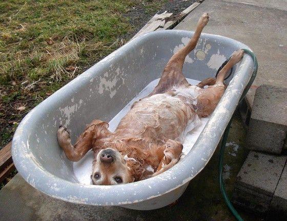 cum se face baie la caine