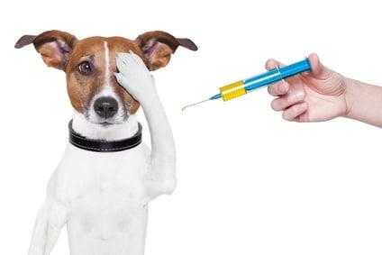 Vaccinarea cainilor