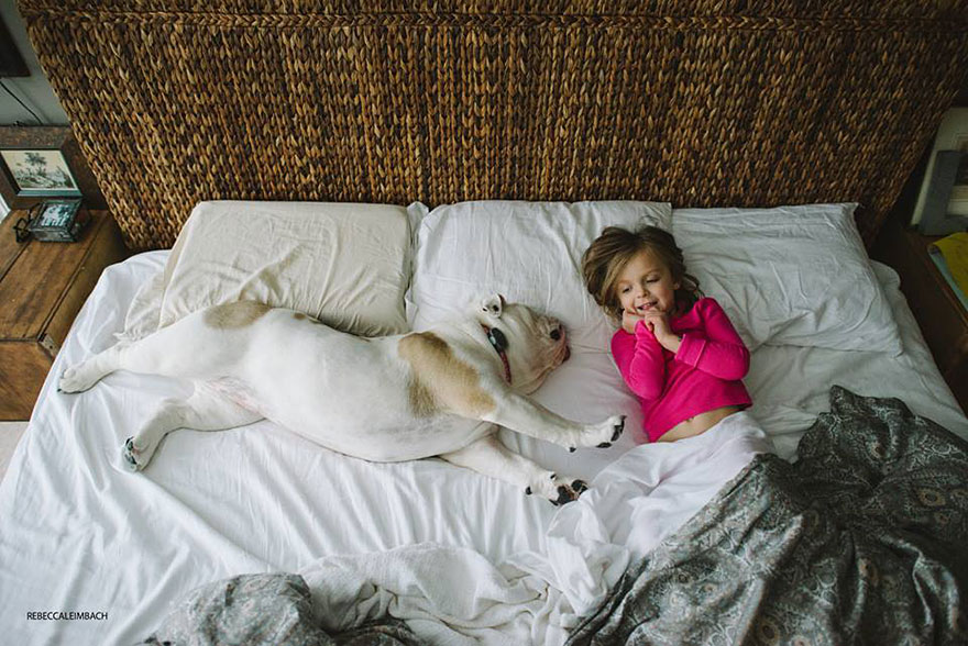 bulldog englez cu copil in pat