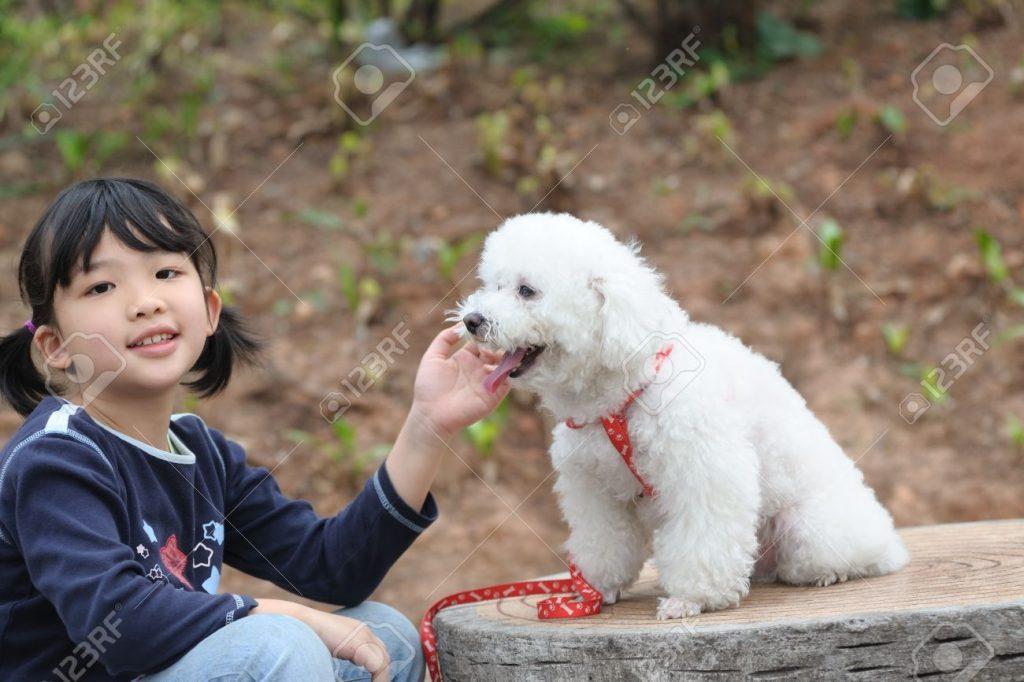 copil asia cu poodle alb