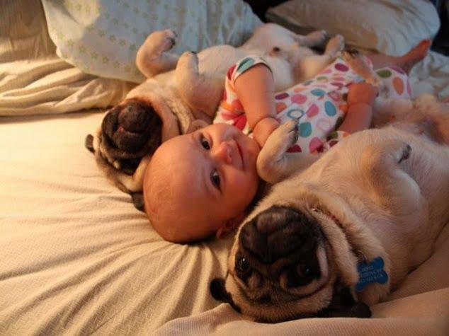 pug cu copil mic in pat
