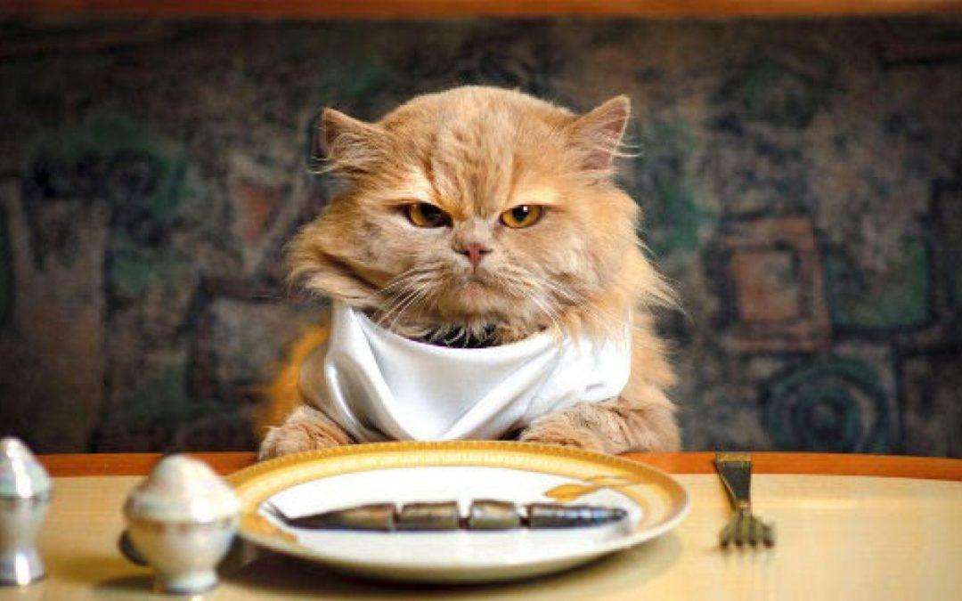 Alimentatia pisicii
