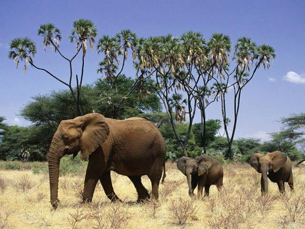 Animalele lumii, prezentare video