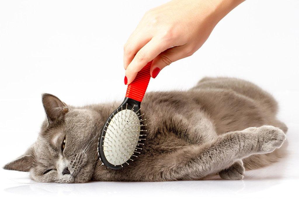 Cum ingrijim blana pisicii