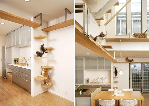 Cum iti pregatesti casa inainte de a aduce o pisica