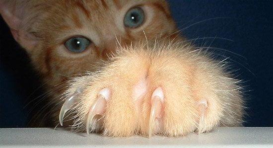 New Jersey este primul stat care interzice taierea unghiilor pisicii