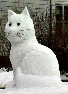 pisica de zapada cu mustati