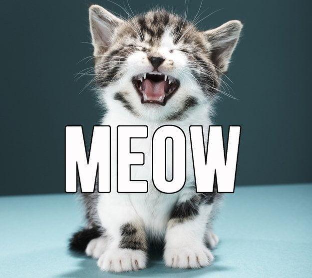 De ce miauna pisicile mici