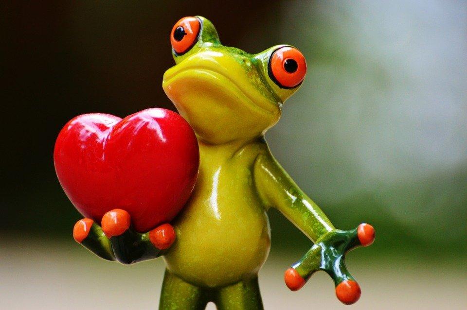 broasca-ofera-inima-de-valentine-day