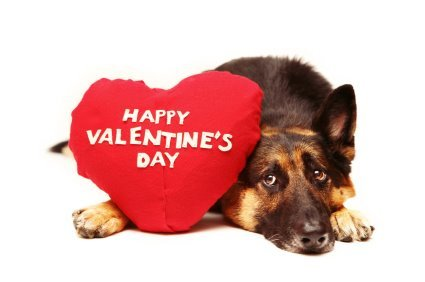 caine ureaza valentine day fericit